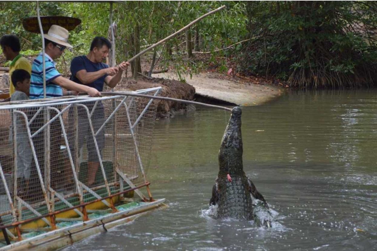 Khu đầm lầy cá sấu